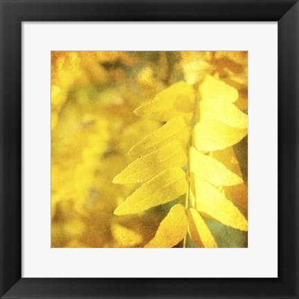 Framed Autumn Photography III Print
