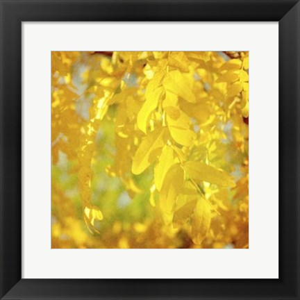 Framed Autumn Photography IV Print