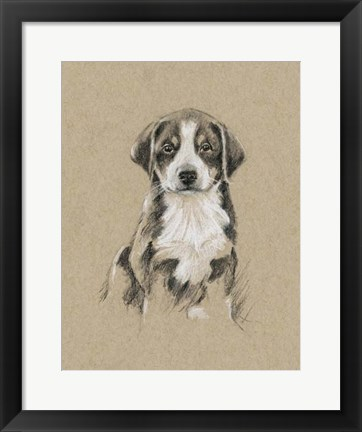 Framed Breed Sketches II Print