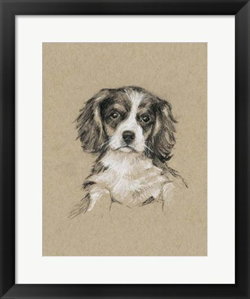 Framed Breed Sketches III Print