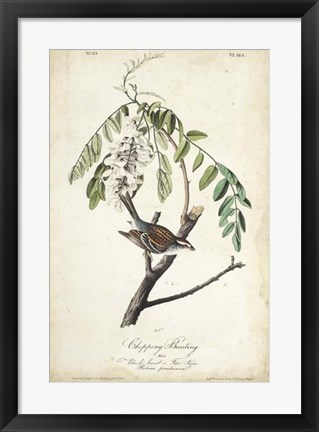 Framed Delicate Bird and Botanical I Print