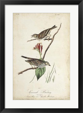 Framed Delicate Bird and Botanical III Print