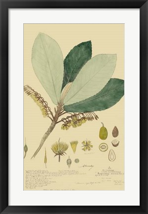 Framed Tropical Descubes I Print