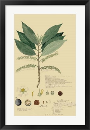 Framed Tropical Descubes III Print