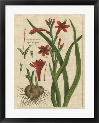 Framed Botanical Study on Linen II Print