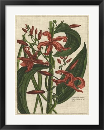 Framed Botanical Study on Linen III Print