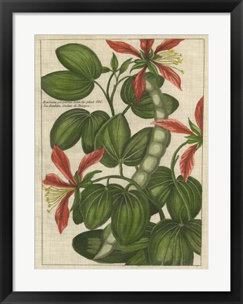 Framed Botanical Study on Linen VI Print