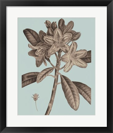 Framed Flowering Trees IV Print