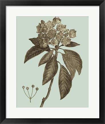 Framed Flowering Trees V Print