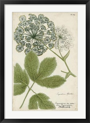 Framed Queen Anne's Lace Print