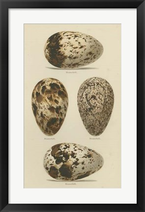 Framed Antique Bird Egg Study VI Print