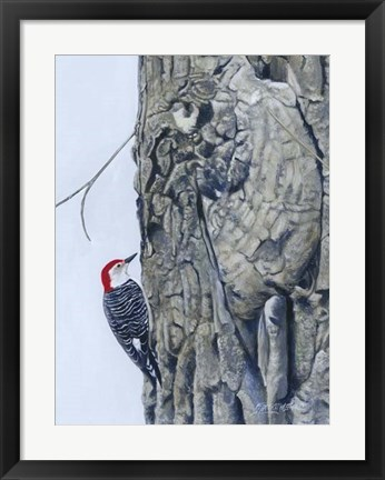 Framed Red Bellied Woodpecker I Print
