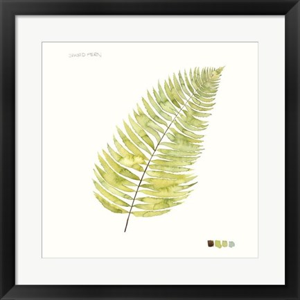 Framed Watercolor Leaf Study IV Print
