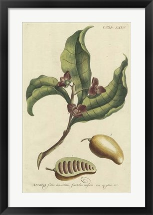 Framed Miller Foliage & Fruit II Print