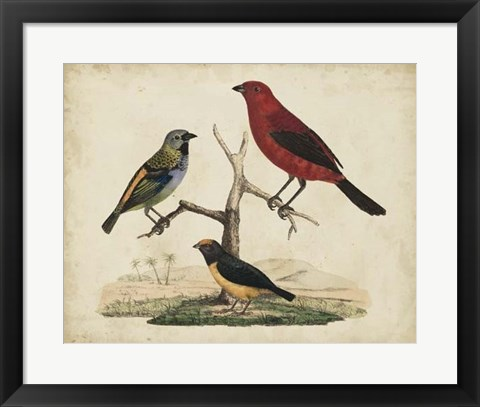 Framed Red & Green Tanager Print