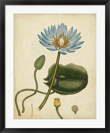Framed Blue Water Lily Print