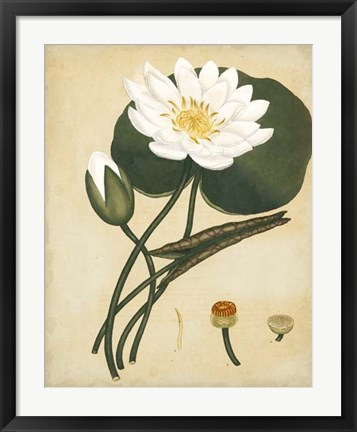 Framed White Water Lily Print