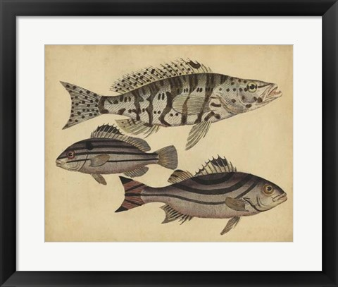 Framed Species of Fish I Print