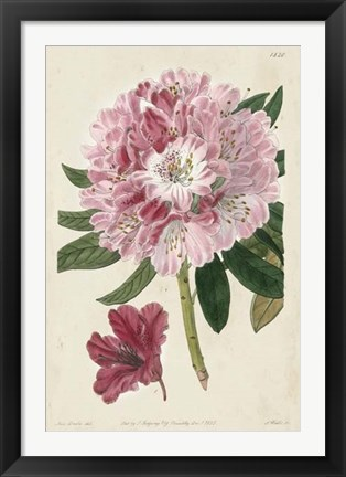 Framed Imperial Floral III Print