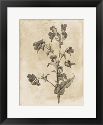 Framed Floral Earthtone Three Print