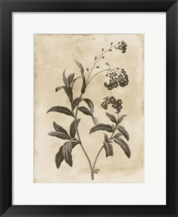 Framed Floral Earthtone Four Print