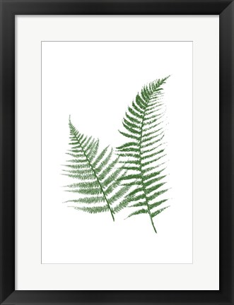 Framed Green Ferns Print