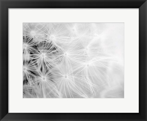 Framed Wishes bw Print