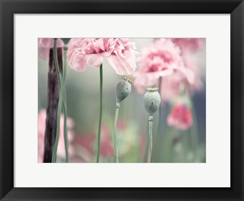 Framed Poppy Pink Print