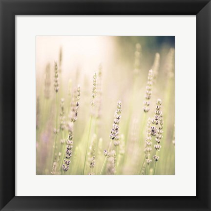 Framed Lavender Fields Print