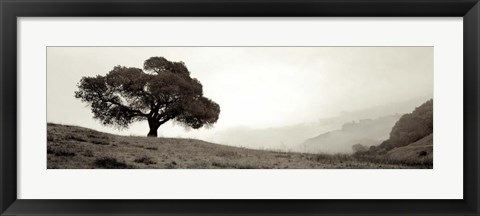 Framed Black Oak I Print
