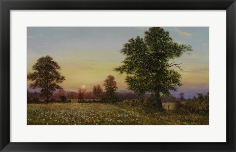 Framed Evening Daisies Print