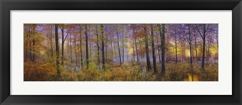 Framed Autumn Wolves Print