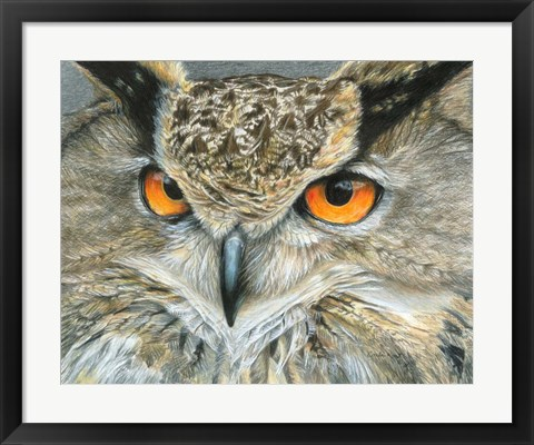 Framed Orange-Eyed Owl Print