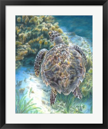 Framed Swimming Turtle Print