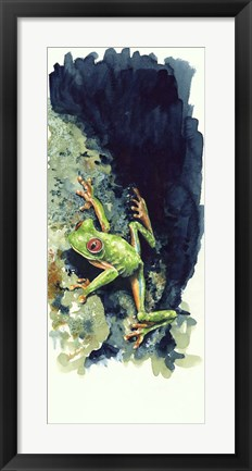 Framed Costa Rican Frog Print