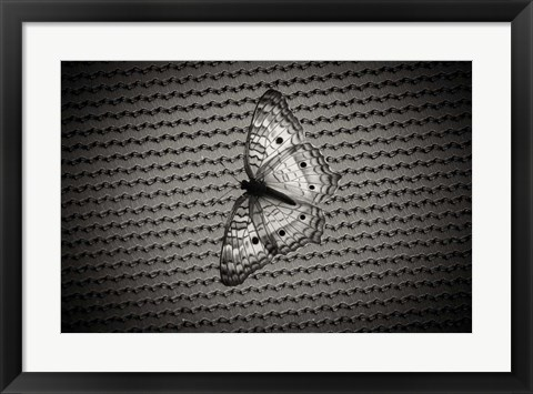 Framed Butterfly Contrast Print