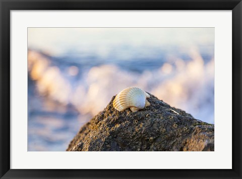 Framed Shellview Surf Print