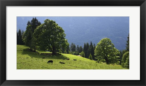 Framed Green Mountainscape cropped Print