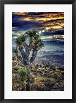 Framed Joshua Tree Sunset Print