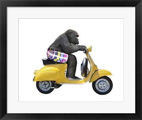 Framed Monkeys Riding Bikes #4 Print