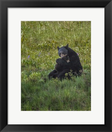 Framed Black Bear Hugging Cub Print