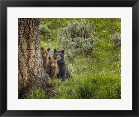 Framed Sow and Cubs Family Print