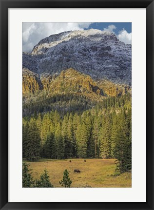 Framed Bison Grazing In The Yellowstone Grand Landscape Print