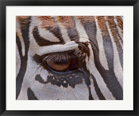 Framed Zebra Eye Print