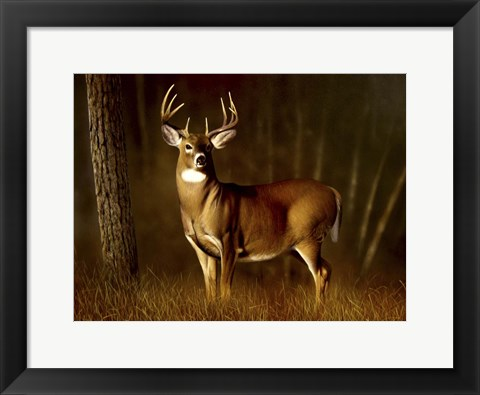 Framed Whitetail Buck Print