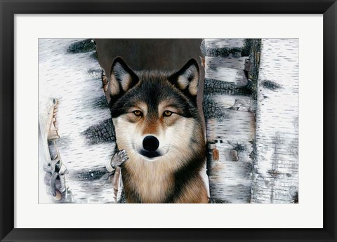 Framed Wolf Peeking Through The Birch Print