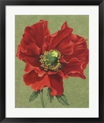Framed Red Poppy 2 Print