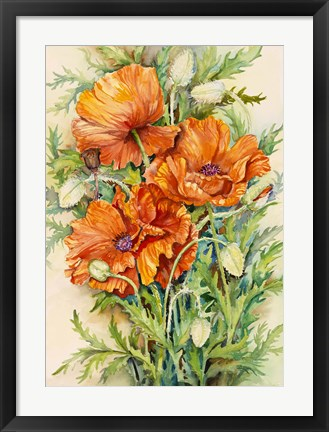Framed Cluster of Poppies Print