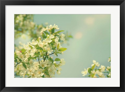 Framed Spring Beauty I Print