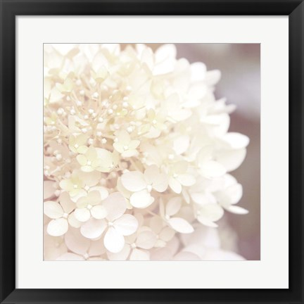 Framed Hydrangea Dream I Print